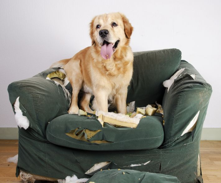 dog-destroyed-chair-upholstery