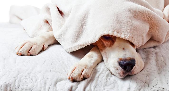Best boxer dog bed